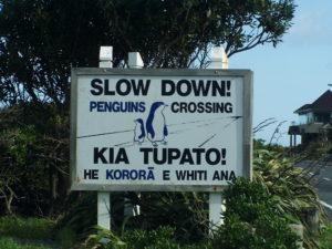 ウェリントン、ペンギン横断注意